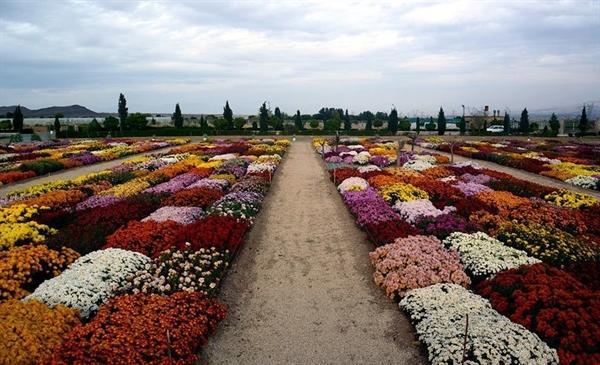 شانزدهمین جشنواره گل و گیاه محلات برگزار می گردد