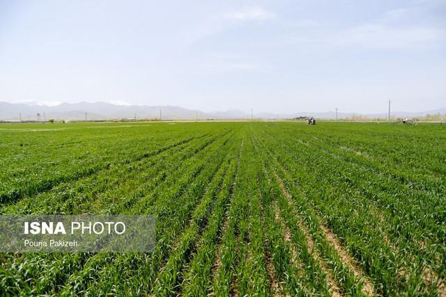 آماده سازی نسخه کشاورزی دیم برای پایداری تولیدات